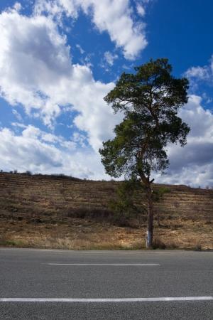 Single tree near highway Stock Photo - 17061835