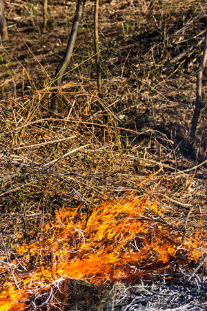 consuming: Fire consuming the dried bushes in the nature Stock Photo