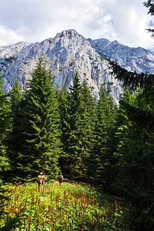 Group of hikers visiting Piatra Craiului Mountains  in the Southern Carpathians in Romania