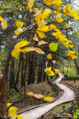 Splendid path in temperate forest in autumn