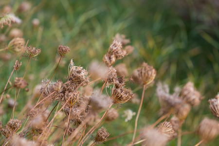 Autumn dried flowers as wild nature background Stock Photo