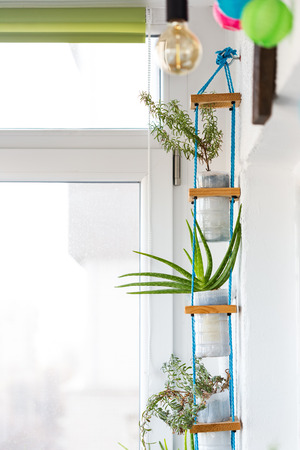 Hanging  multi plant system, using pots from recycled plastic milk containers Stock Photo