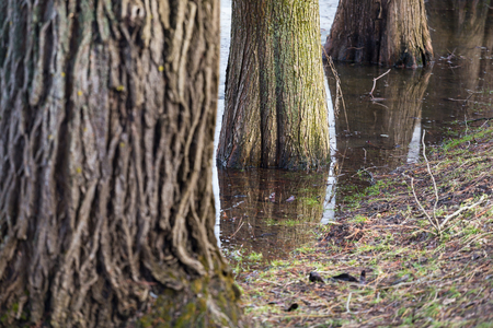 Trees base submerged in the water