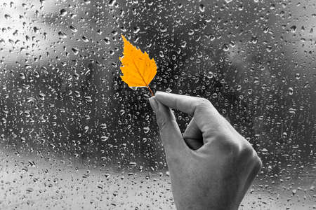 Yellow leaf in hand on a wet window. Rainy autumn day. The window is all in drops. Autumn background.