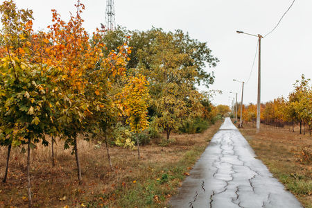 Autumn song,the road,the background image for advertisement,a text insertion Stock Photo