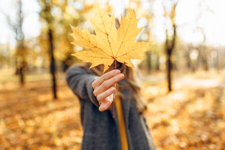 Beautiful young girl enjoying autumn in the Park, holding autumn maple leaf in her hands, covering her face with it