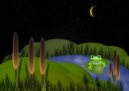 green frog at night on a bog photo