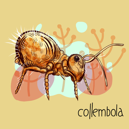 Hand drawing illustration with springtail (collembola) insect anf floral background