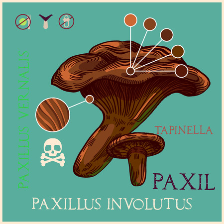 Paxil mushroom in engraved style. Subscribed with characteristics and several titles. Vector illustration with infographic elements and lettering. Vectores