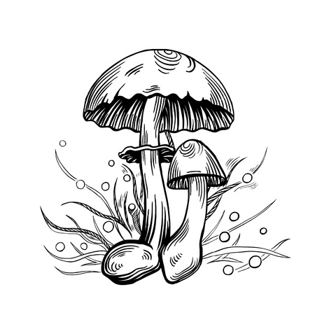 Yellow staining mushroom with grass on background in engraved style. Vector illustration.