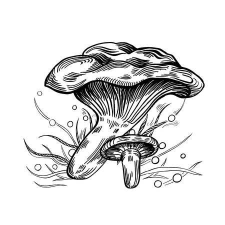 Paxil mushroom with grass on background in engraved style. Vector illustration.