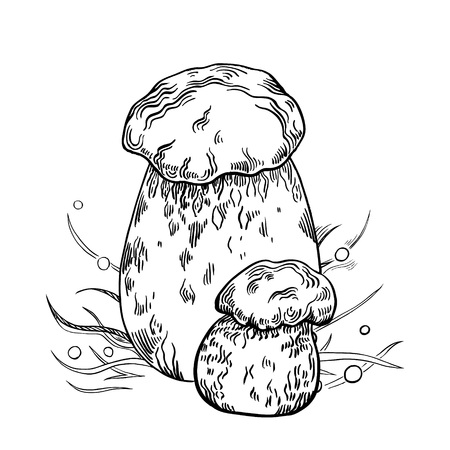 Porcini mushroom with grass on background in engraved style. Vector illustration.