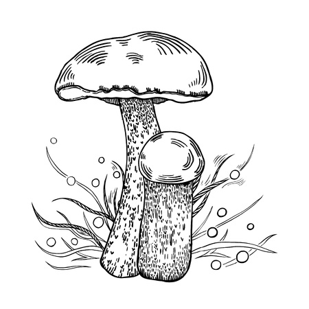 Red-cap bolete mushroom with grass on background in engraved style. Vector illustration.