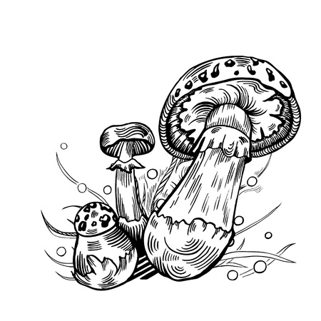 False death cap mushroom with grass on background in engraved style. Vector illustration.