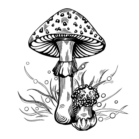 Fly agaric mushroom with grass on background in engraved style. Vector illustration. Illustration
