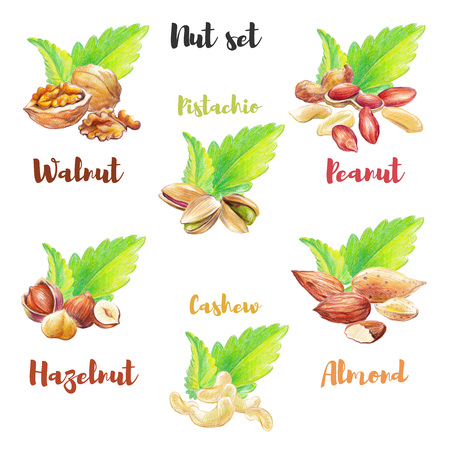 Nut set hand drawn with colored pencil. Different nut types isolated on white background with green mint leaves. Stok Fotoğraf