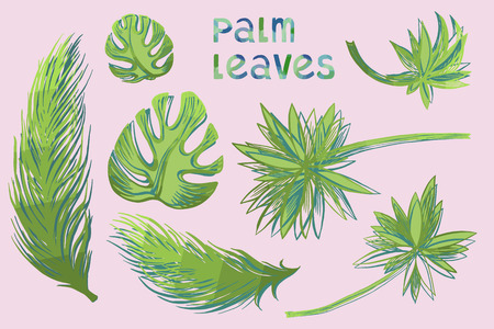 Hand drawn vector illustration with palm leaves in engraved style. signed with watercolor letters.