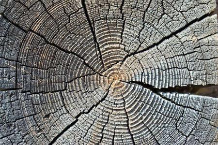 crosscut: Close-up of old, weather-beaten log crosscut