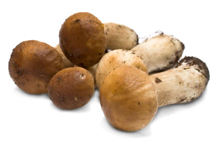 Forest mushrooms - Boletus edulis isolated on white background