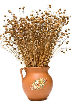 usitatissimum: Flax (Linum usitatissimum) in the pottery jug on white background Stock Photo