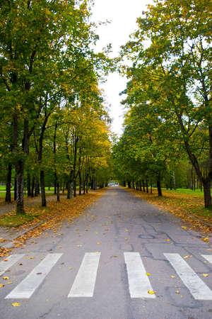 Zebra pattern pedestrian crossing in the autumn photo