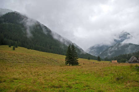 Mountain landscape in the mist. Polish Tatras. Dolina ChocholowskaChocholowska Valley