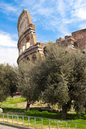 The Coliseum and olive trees in spring. Roma, Italy. Stock Photo