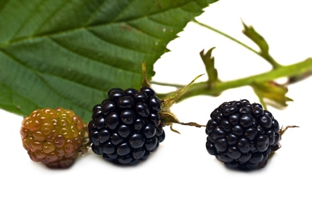 Fresh blackberries with leafs on white background Stock Photo