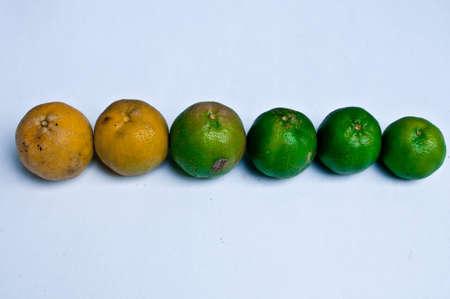 reduces: arrange of fresh yellow and green lemon Stock Photo