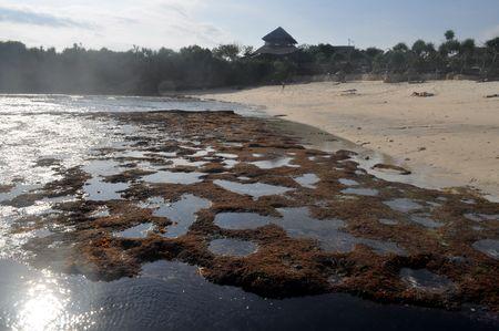 ebb: Małe Wyspy Lembongan  Dream plaży podczas bieg ebb