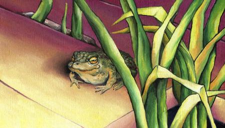 bask: Frog, basking in the sun. Stock Photo