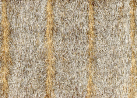 Grey faux fur with vertical stripes.Background, texture, decorative wallpapers
