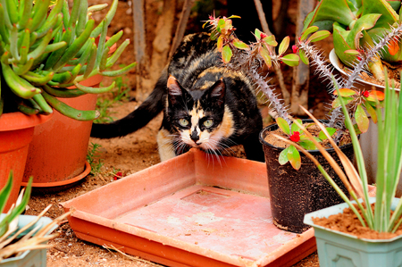 Cat hide in the home plants