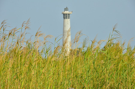 white lighthouse and green seed