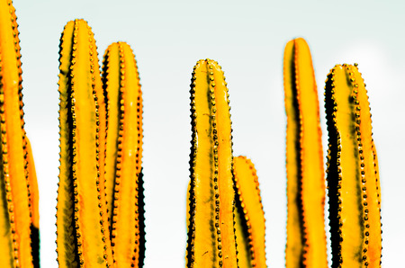 yellow vintage concept. cactus and strikes