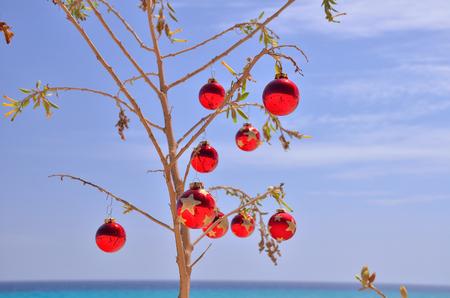 red christmas ball on the thorny bush near the beach and ocean