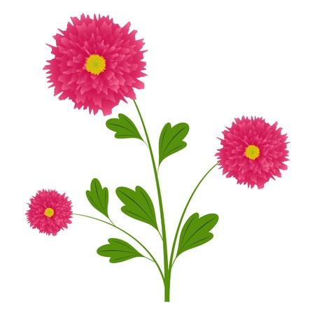 Aster flower Stock Vector - 13511588