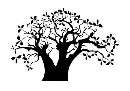 baobab: Baobab
