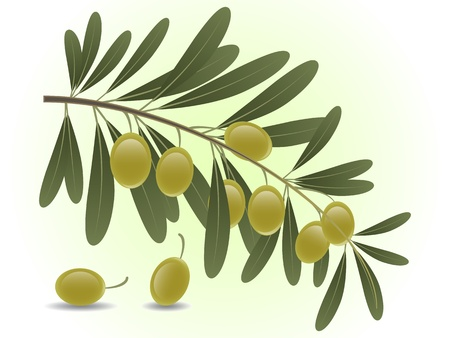 Green olive branch Stock Vector - 15124814