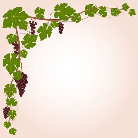 Grape corner Vector