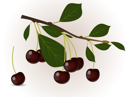 Cherry branch Stock Vector - 15764346