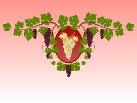 Shield with grape bunch Vector