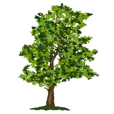 Abstract summer tree Stock Vector - 17346692