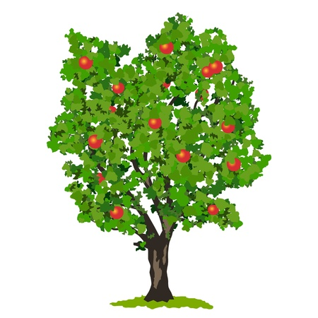 arbol de manzanas: Manzano ilustraci�n vectorial