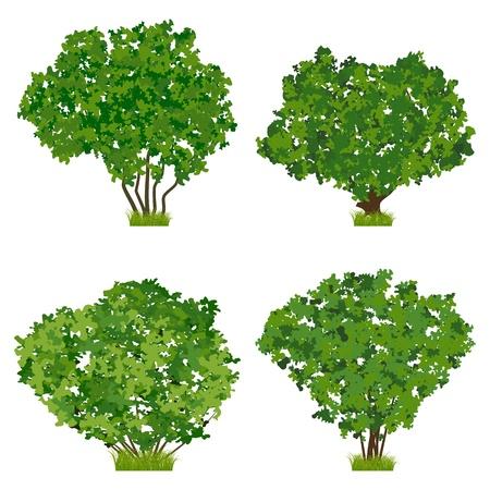 Green shrubs vector set