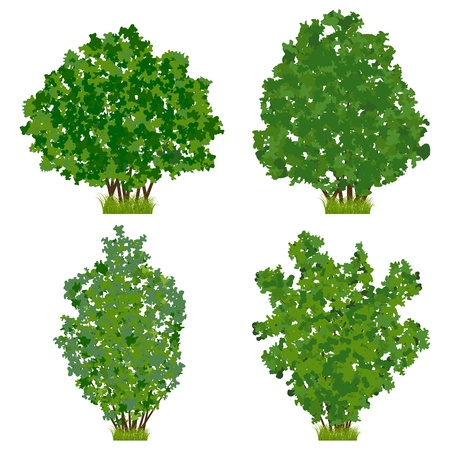 Green shrubs vector set Vector