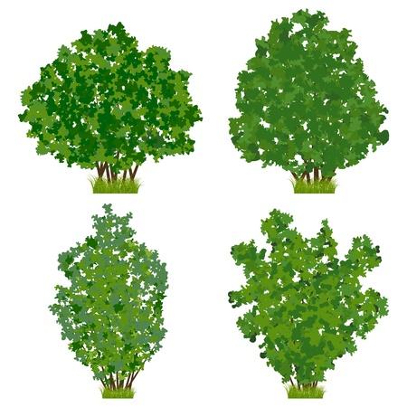 Vert vector set arbustes Vecteurs