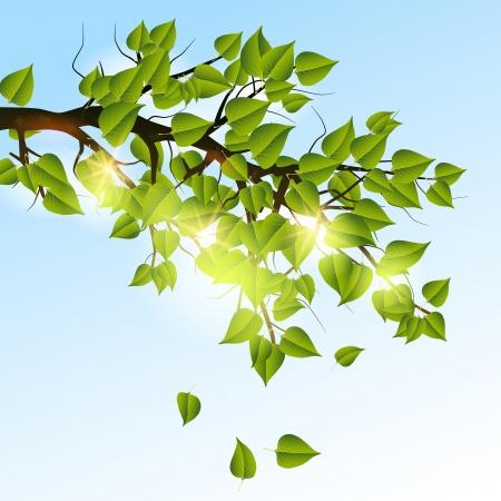 Summer tree branch Stock Vector - 20664244