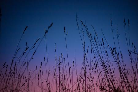 murk: summer grass at sunset Stock Photo