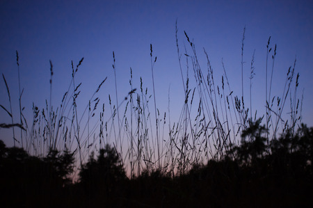 dusky: summer grass at sunset Stock Photo